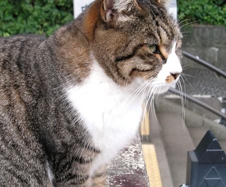 凛々しいネコの横顔